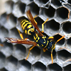 A wasp on a honeycomb